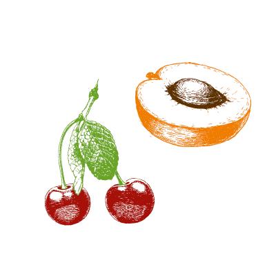 Aprikosen und Kirschen